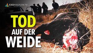 Tod auf der Weide - Das Rätsel der Viehverstümmelungen